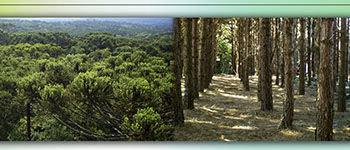 Programa de Pós-Graduação em Ciências Florestais