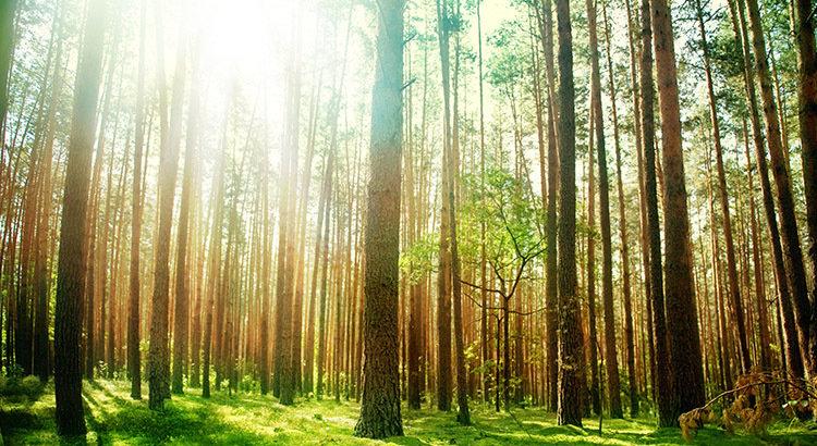 Imagem Engenharia Florestal